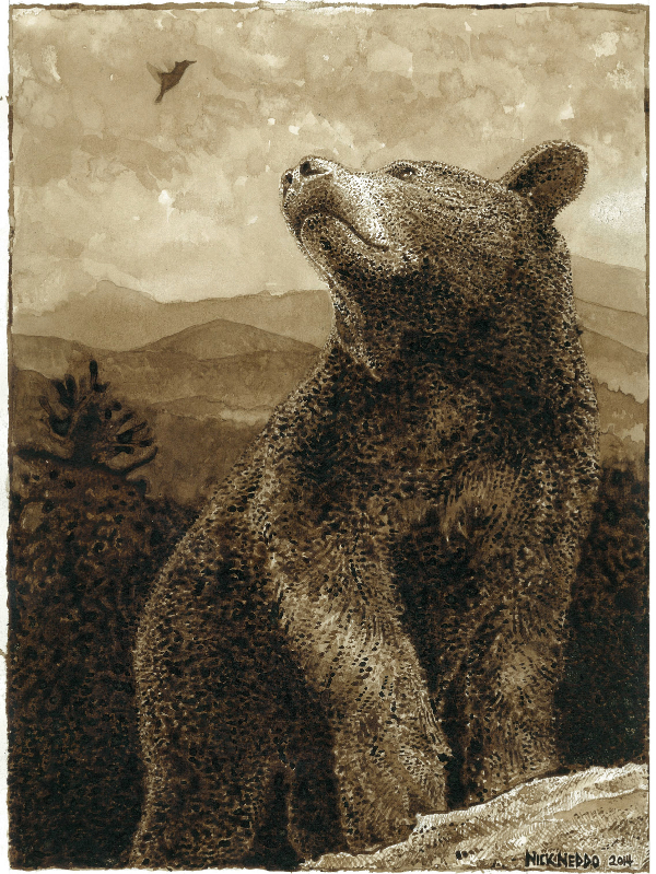 """Hummingbird talks to Bear"" by Nick Neddo- with wildcrafted walnut ink and bear fur paintbrush."