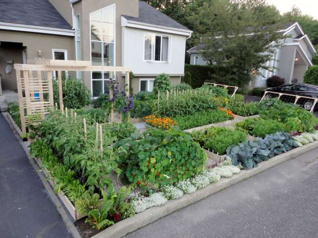 Grow Food- Not Lawns!