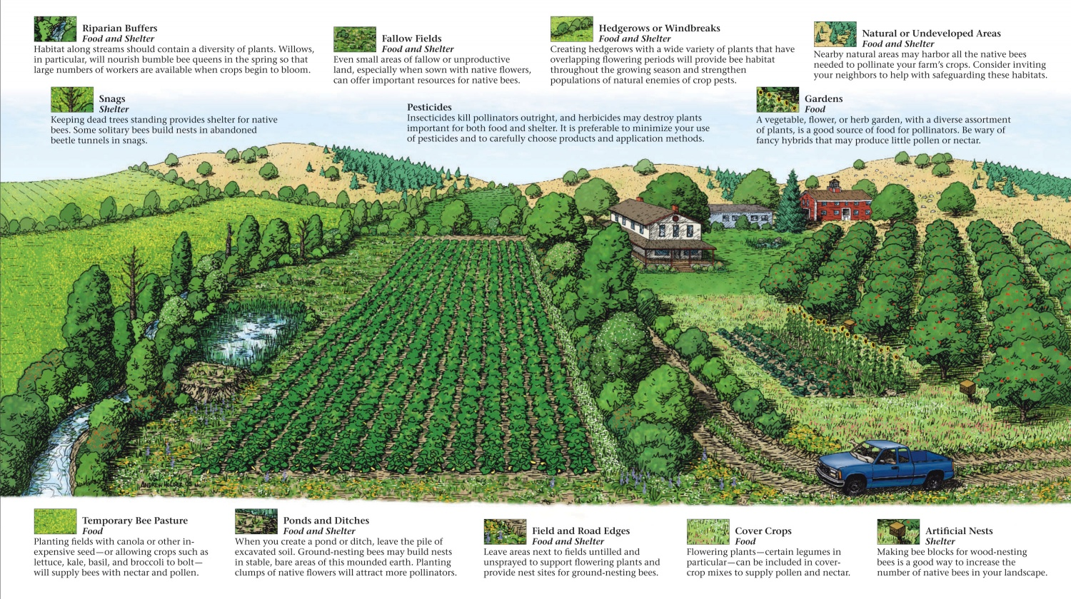 farming_for_pollinators_brochure-2-Image-is-courtesy-of-the-Xerces-Society